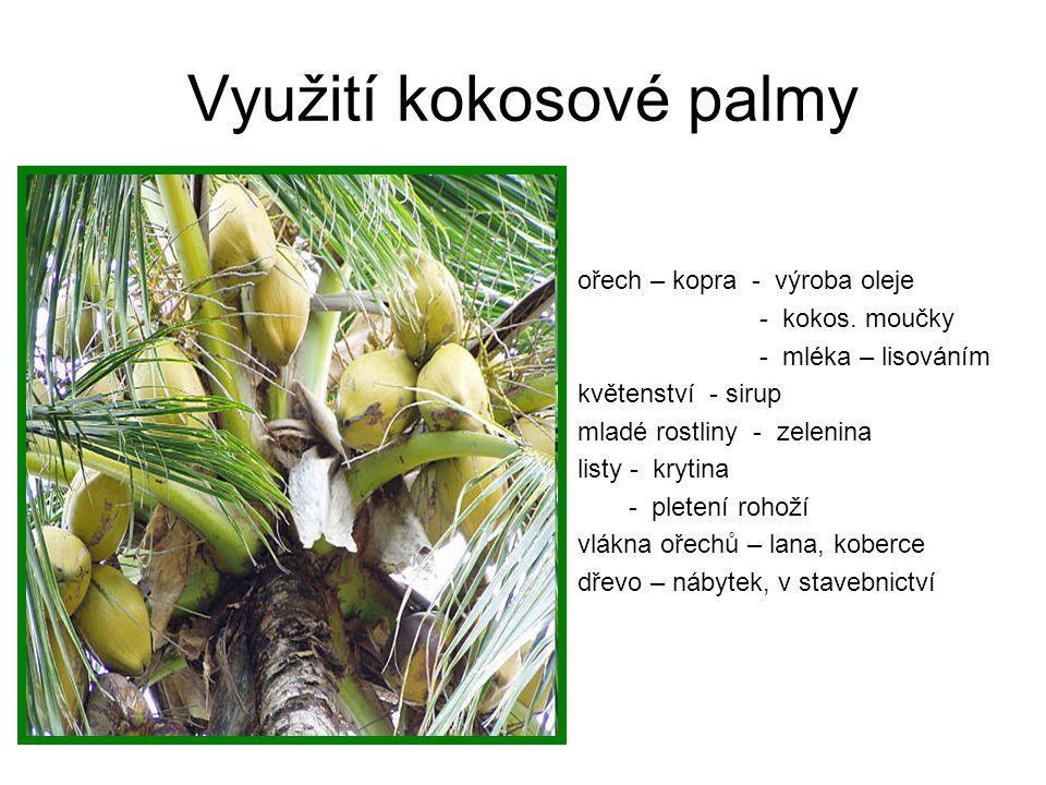 Využití kokosové palmy ořech – kopra - výroba oleje - kokos. moučky - mléka – lisováním květenství - sirup mladé rostliny - zelenina listy - krytina -