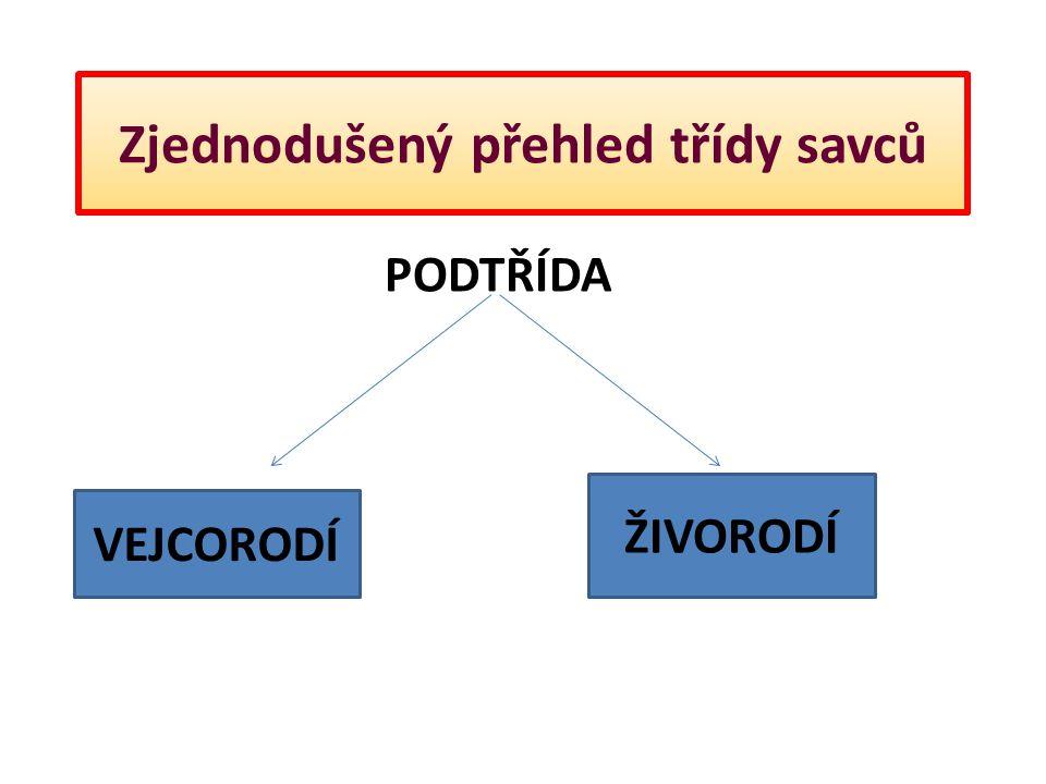Zjednodušený přehled třídy savců Ptakopysk podivný Párek ptakopysků obývá společnou noru.