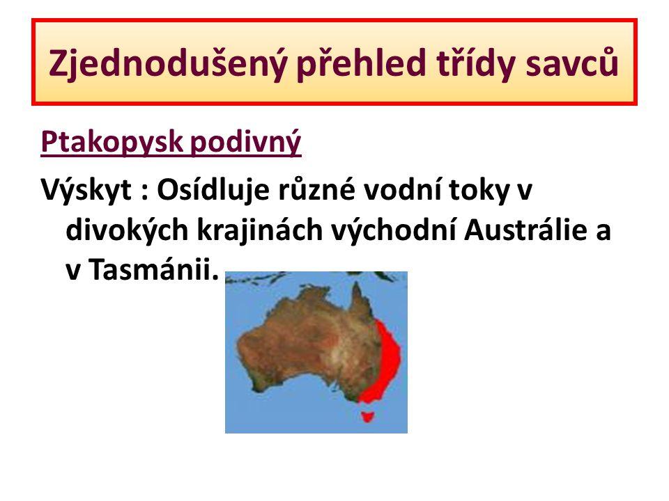 Zjednodušený přehled třídy savců Ptakopysk podivný Výskyt : Osídluje různé vodní toky v divokých krajinách východní Austrálie a v Tasmánii.