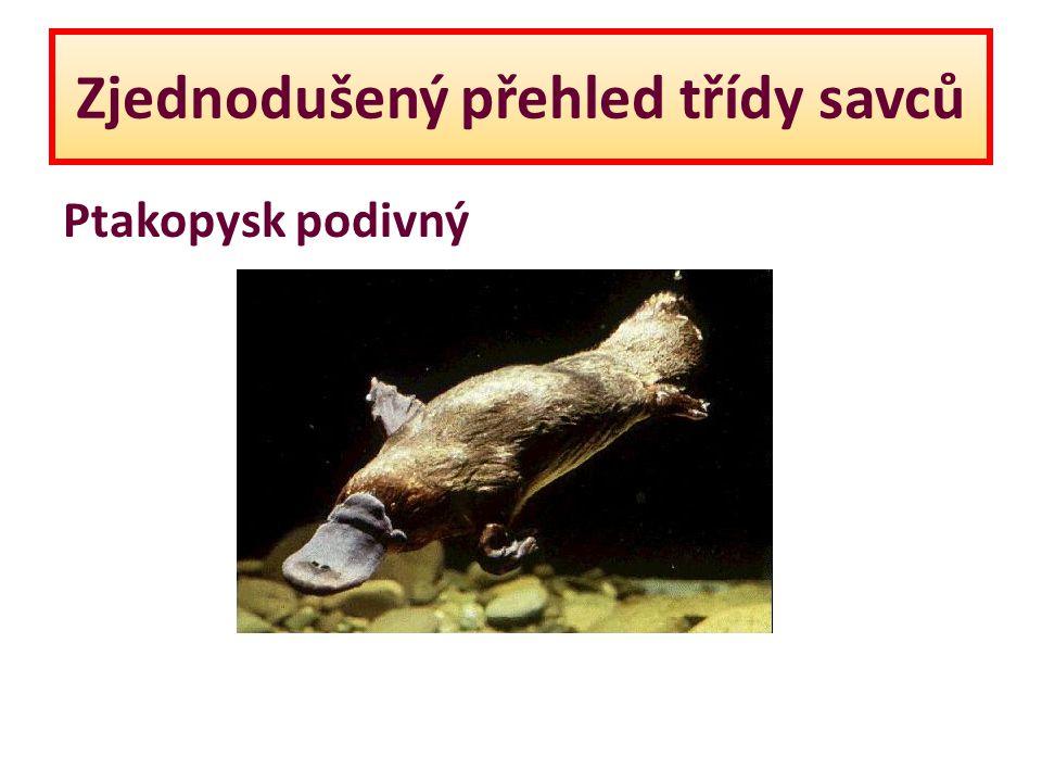 Zjednodušený přehled třídy savců Ptakopysk podivný