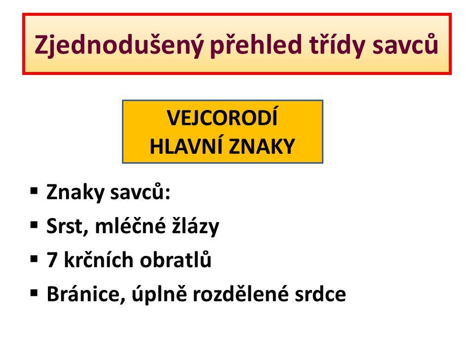 Zjednodušený přehled třídy savců  Znaky savců:  Srst, mléčné žlázy  7 krčních obratlů  Bránice, úplně rozdělené srdce VEJCORODÍ HLAVNÍ ZNAKY