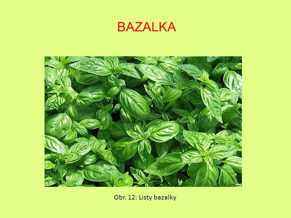 BAZALKA Obr. 12: Listy bazalky
