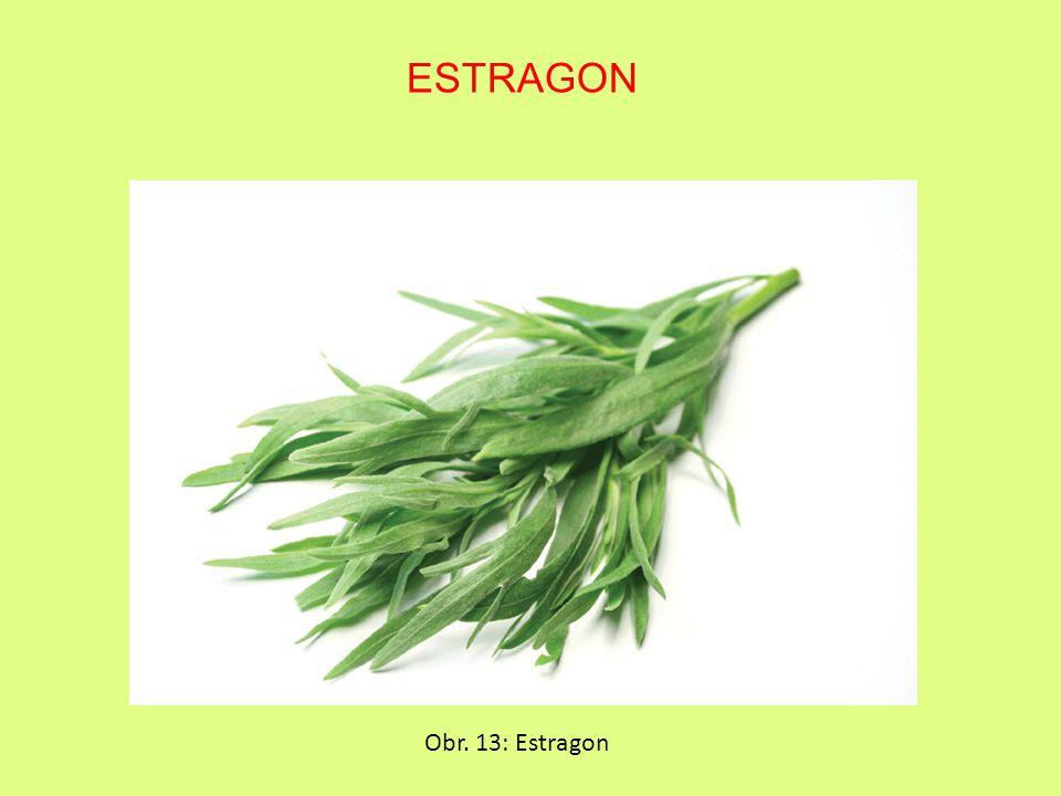 Obr. 13: Estragon ESTRAGON