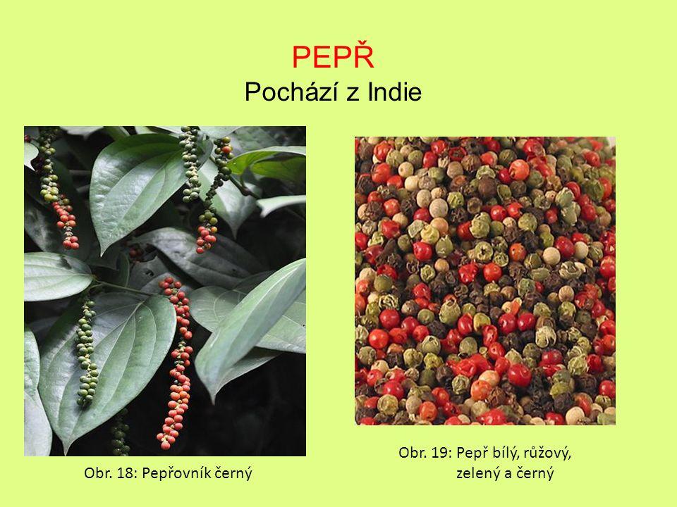 PEPŘ Pochází z Indie Obr. 18: Pepřovník černý Obr. 19: Pepř bílý, růžový, zelený a černý