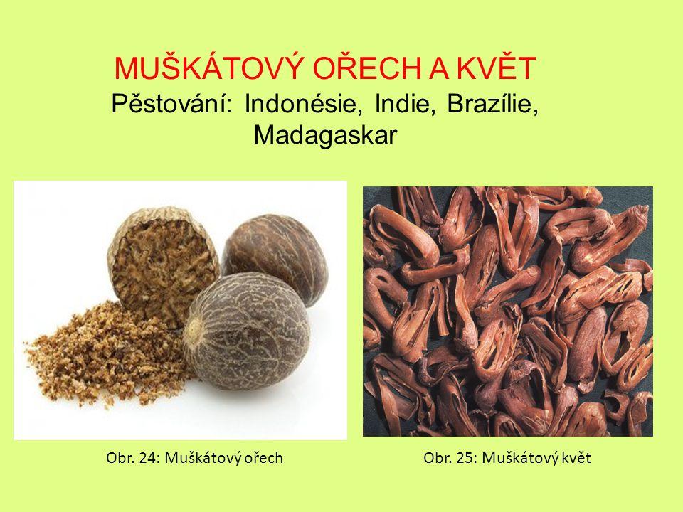 MUŠKÁTOVÝ OŘECH A KVĚT Pěstování: Indonésie, Indie, Brazílie, Madagaskar Obr.