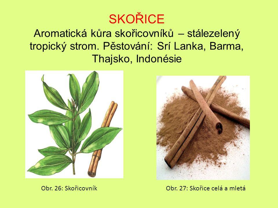 SKOŘICE Aromatická kůra skořicovníků – stálezelený tropický strom.