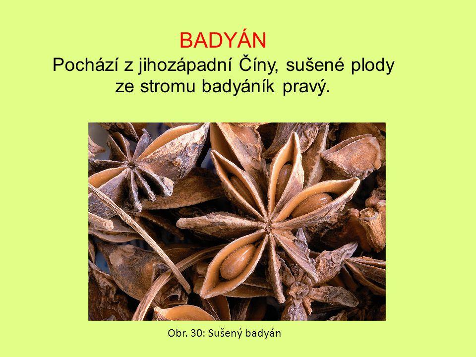 BADYÁN Pochází z jihozápadní Číny, sušené plody ze stromu badyáník pravý. Obr. 30: Sušený badyán