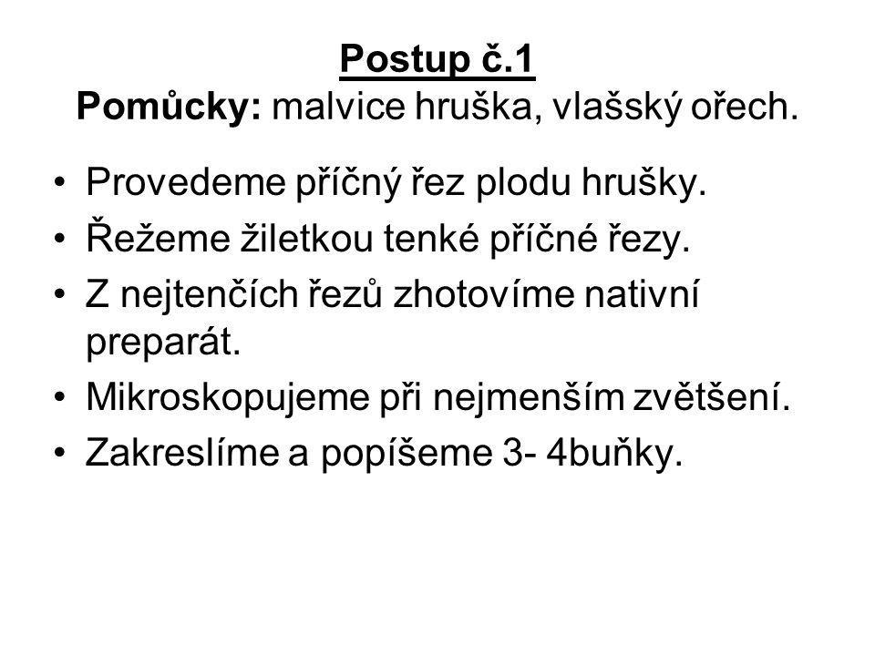 Postup č.1 Pomůcky: malvice hruška, vlašský ořech.