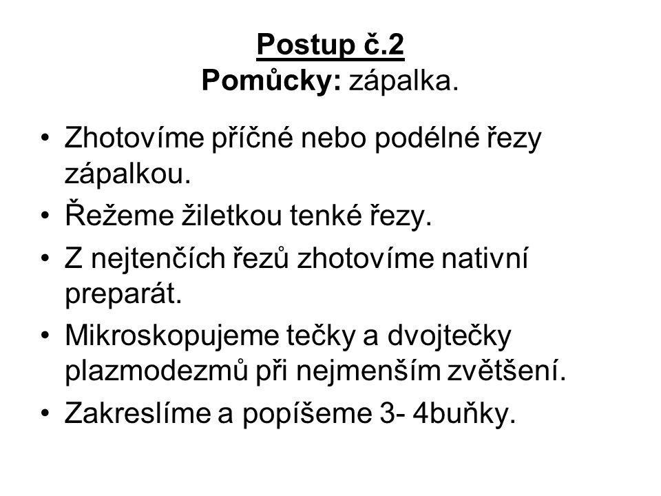 Postup č.2 Pomůcky: zápalka.Zhotovíme příčné nebo podélné řezy zápalkou.