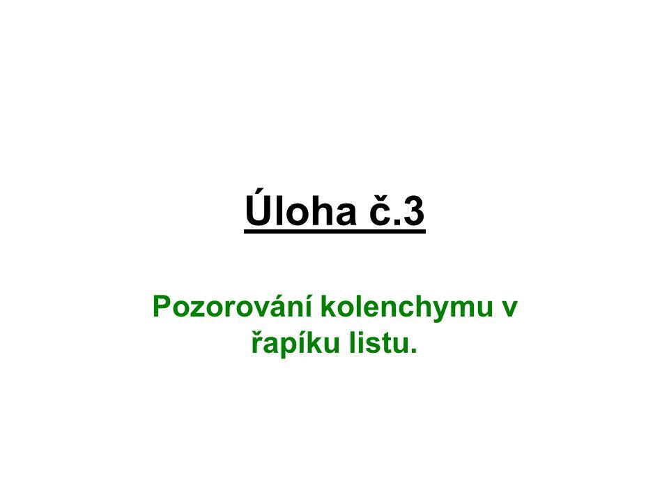 Úloha č.3 Pozorování kolenchymu v řapíku listu.