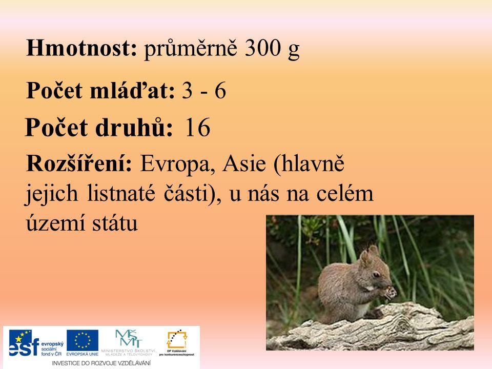 Hmotnost: průměrně 300 g Počet mláďat: 3 - 6 Počet druhů: 16 Rozšíření: Evropa, Asie (hlavně jejich listnaté části), u nás na celém území státu