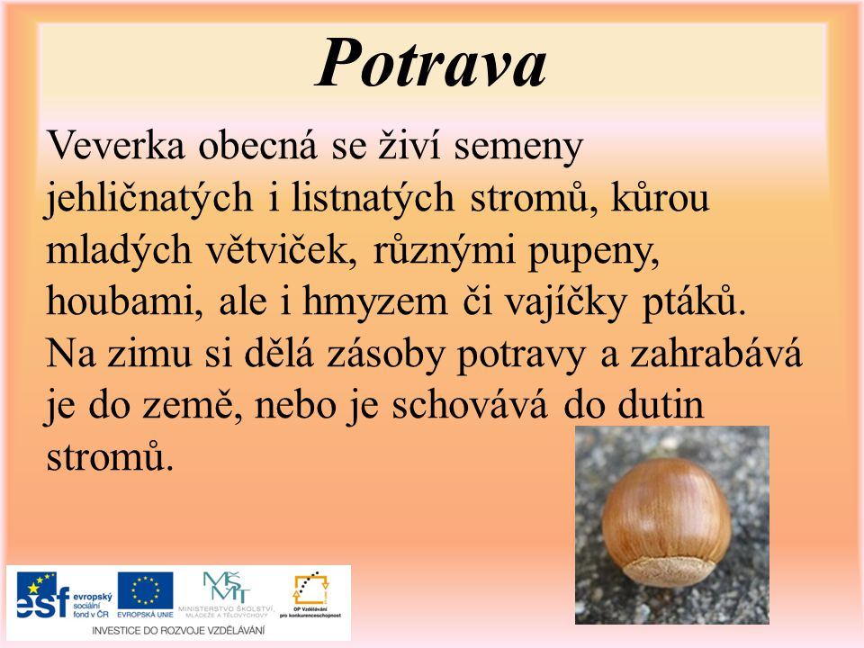 Sciurus vulgaris Suomi-e.In: Wikipedia: the free encyclopedia [online].