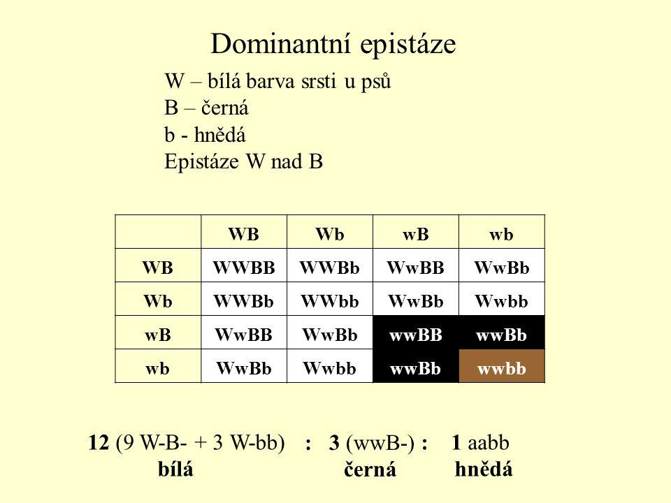 W – bílá barva srsti u psů B – černá b - hnědá Epistáze W nad B 12 (9 W-B- + 3 W-bb) bílá : 3 (wwB-) černá : 1 aabb hnědá Dominantní epistáze WBWbwBwb