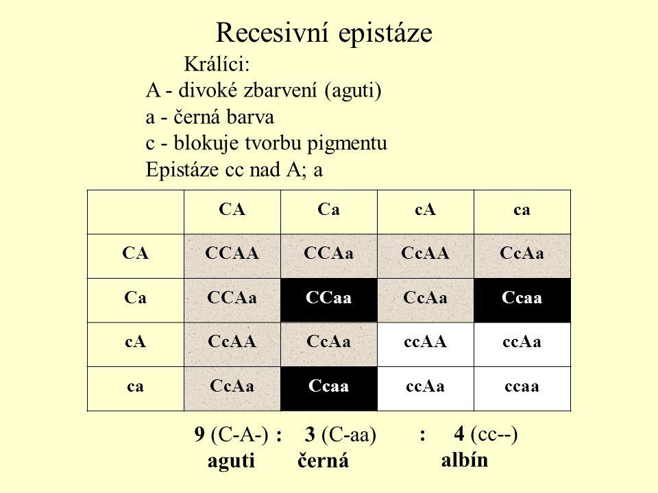9 (C-A-) aguti : 3 (C-aa) černá : 4 (cc--) albín Králíci: A - divoké zbarvení (aguti) a - černá barva c - blokuje tvorbu pigmentu Epistáze cc nad A; a
