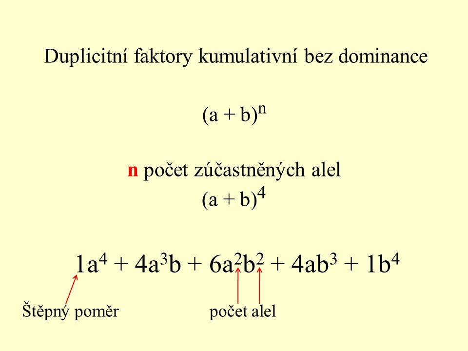 (a + b) n n počet zúčastněných alel (a + b) 4 1a 4 + 4a 3 b + 6a 2 b 2 + 4ab 3 + 1b 4 Štěpný poměr počet alel Duplicitní faktory kumulativní bez domin