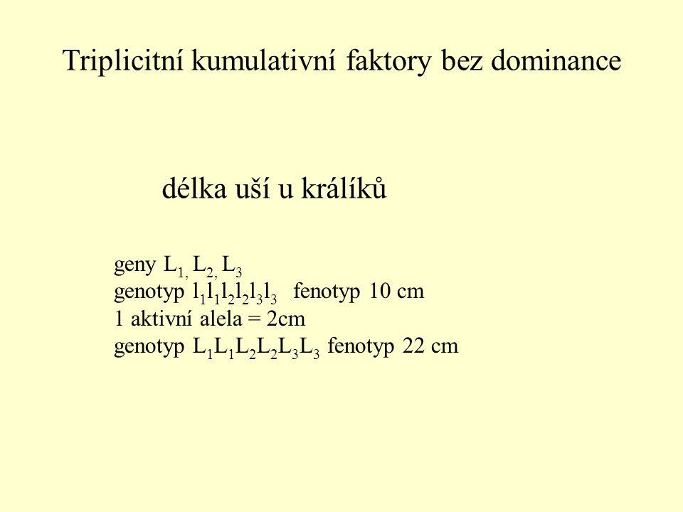délka uší u králíků geny L 1, L 2, L 3 genotyp l 1 l 1 l 2 l 2 l 3 l 3 fenotyp 10 cm 1 aktivní alela = 2cm genotyp L 1 L 1 L 2 L 2 L 3 L 3 fenotyp 22