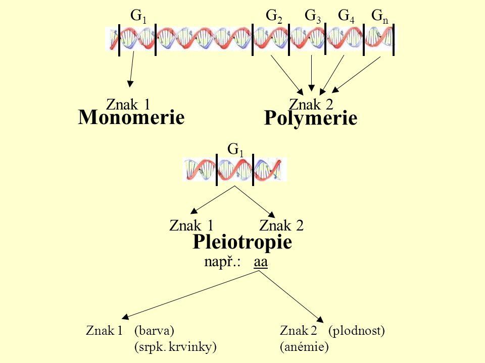 Polymerie Monomerie Pleiotropie Znak 1 Znak 2 např.: aa Znak 1(barva) Znak 2(plodnost) (srpk. krvinky)(anémie) G 1 G 2 G 3 G 4 G n G 1