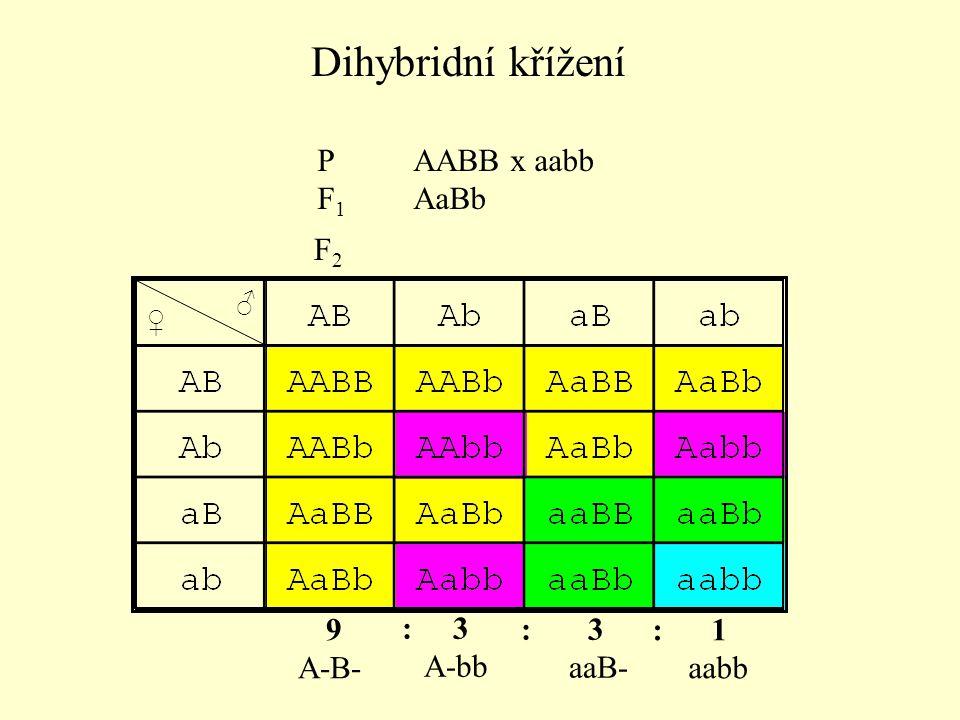 A-B- ořechovitý hřebínek A-bb růžicovitý hřebínek aaB- hráškovitý hřebínek aabb listovitý hřebínek (barva papriky) 9 ořechovitý : 3 růžicovitý : 3 hráškovitý : 1 listovitý Interakce bez změny štěpného poměru
