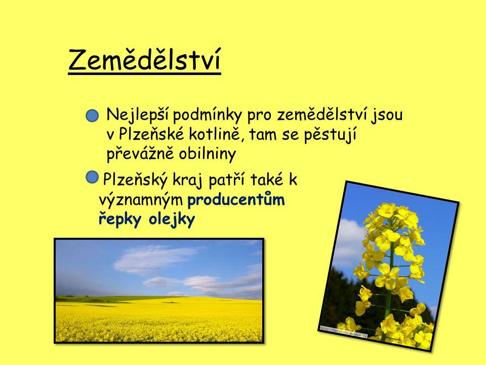 Zemědělství Nejlepší podmínky pro zemědělství jsou v Plzeňské kotlině, tam se pěstují převážně obilniny Plzeňský kraj patří také k významným producent
