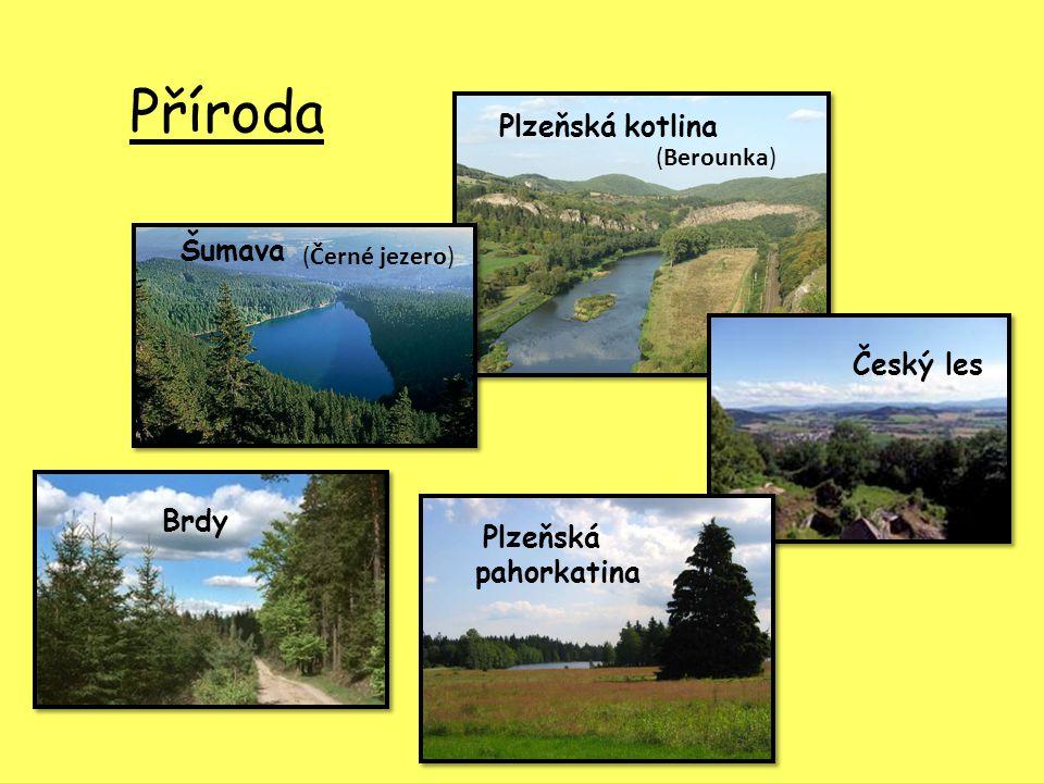 Příroda Šumava Plzeňská pahorkatina Plzeňská kotlina Brdy Český les (Černé jezero) (Berounka)