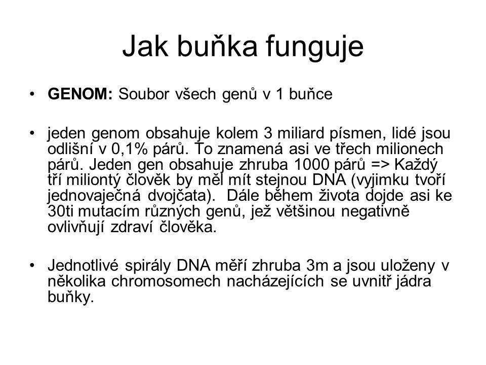 Jak buňka funguje GENOM: Soubor všech genů v 1 buňce jeden genom obsahuje kolem 3 miliard písmen, lidé jsou odlišní v 0,1% párů.