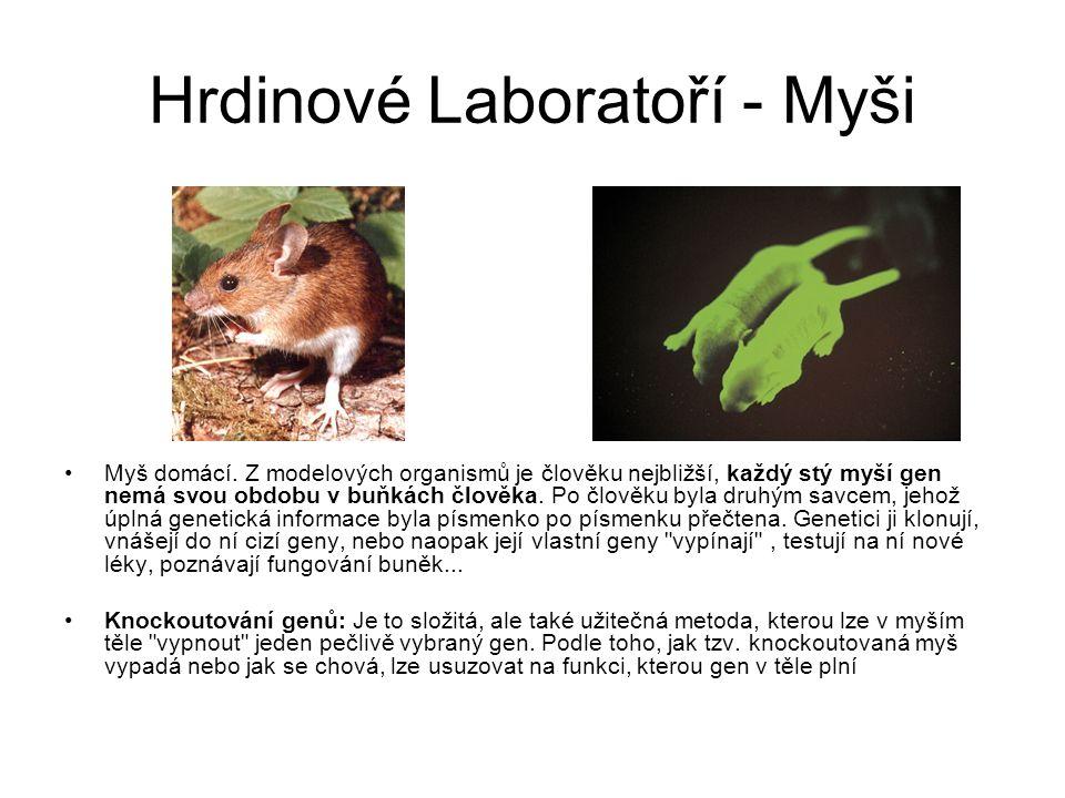 Hrdinové Laboratoří - Myši Myš domácí.