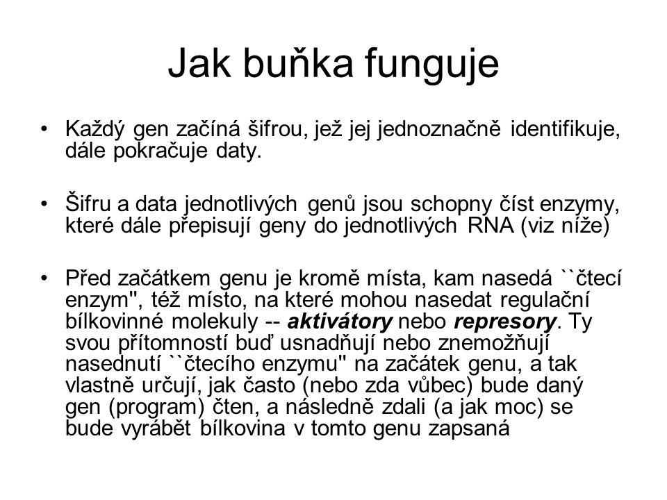 Jak buňka funguje Každý gen začíná šifrou, jež jej jednoznačně identifikuje, dále pokračuje daty.