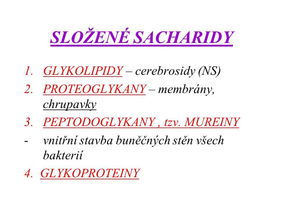 SLOŽENÉ SACHARIDY 1.GLYKOLIPIDY – cerebrosidy (NS) 2.PROTEOGLYKANY – membrány, chrupavky 3.PEPTODOGLYKANY, tzv. MUREINY -vnitřní stavba buněčných stěn