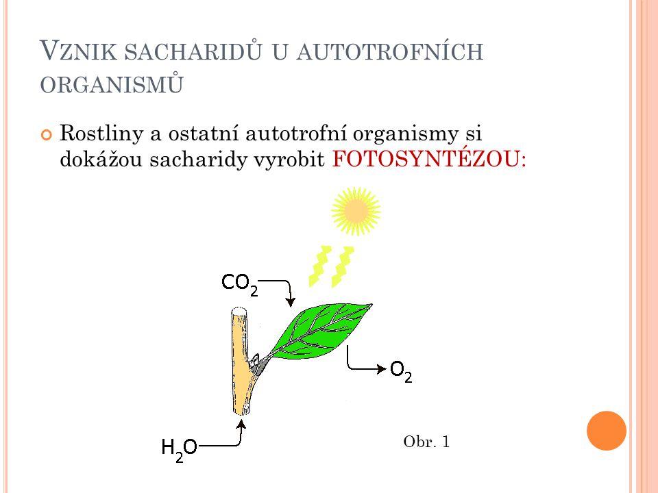 V ZNIK SACHARIDŮ U AUTOTROFNÍCH ORGANISMŮ Rostliny a ostatní autotrofní organismy si dokážou sacharidy vyrobit FOTOSYNTÉZOU: Obr.