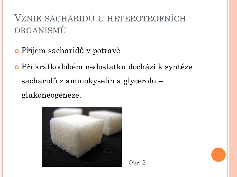 V ZNIK SACHARIDŮ U HETEROTROFNÍCH ORGANISMŮ Příjem sacharidů v potravě Při krátkodobém nedostatku dochází k syntéze sacharidů z aminokyselin a glycerolu – glukoneogeneze.