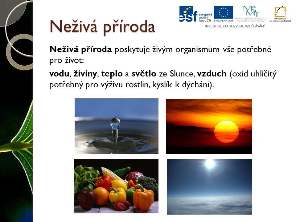Neživá příroda Neživá příroda poskytuje živým organismům vše potřebné pro život: vodu, živiny, teplo a světlo ze Slunce, vzduch (oxid uhličitý potřebn