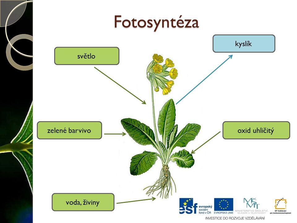Fotosyntéza voda, živiny oxid uhličitý kyslík zelené barvivo světlo