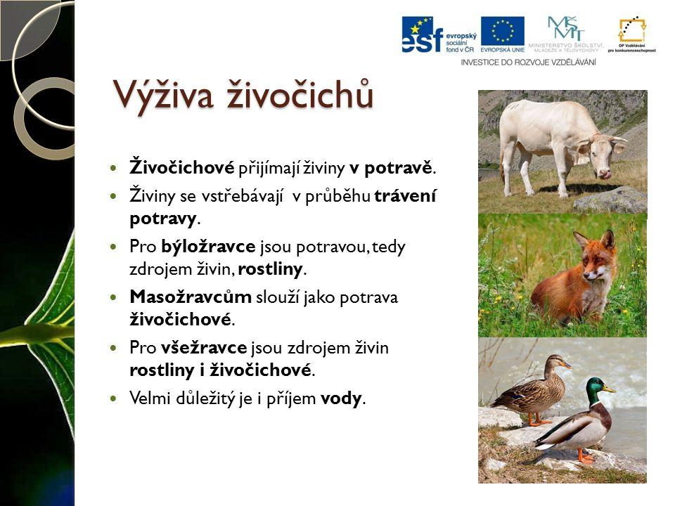 Výživa živočichů Živočichové přijímají živiny v potravě. Živiny se vstřebávají v průběhu trávení potravy. Pro býložravce jsou potravou, tedy zdrojem ž