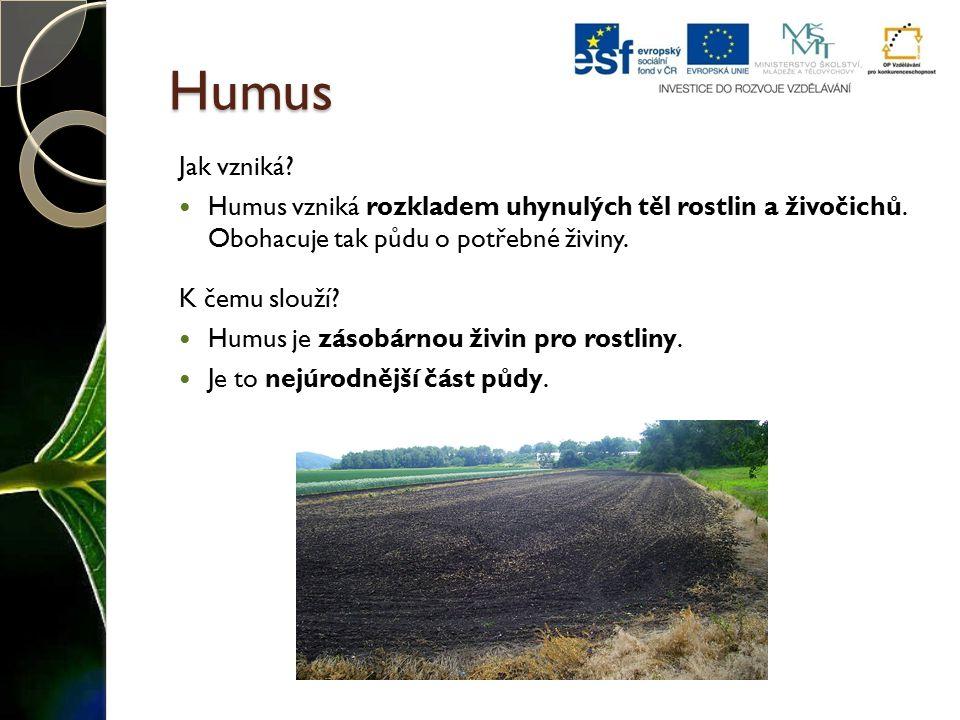 Humus Jak vzniká? Humus vzniká rozkladem uhynulých těl rostlin a živočichů. Obohacuje tak půdu o potřebné živiny. K čemu slouží? Humus je zásobárnou ž