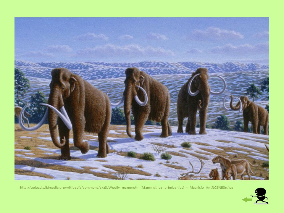 http://upload.wikimedia.org/wikipedia/commons/a/a3/Woolly_mammoth_(Mammuthus_primigenius)_-_Mauricio_Ant%C3%B3n.jpg