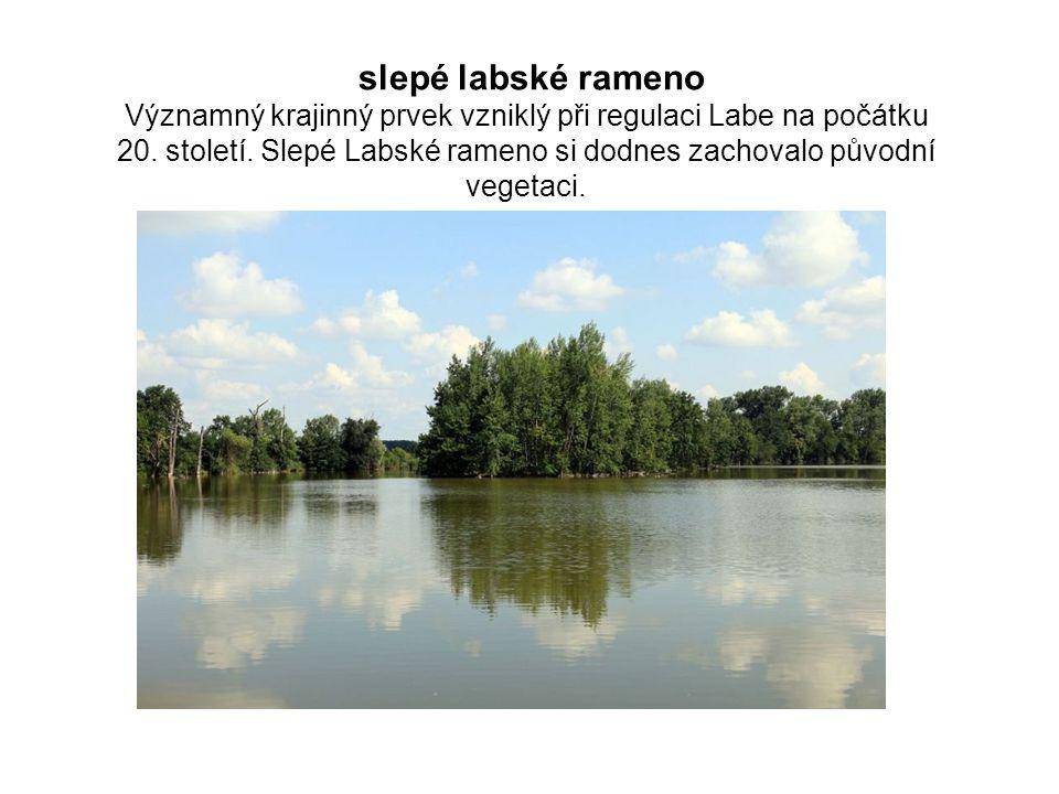 slepé labské rameno Významný krajinný prvek vzniklý při regulaci Labe na počátku 20.