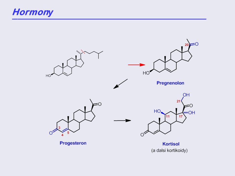 Hormon y _____________________________________