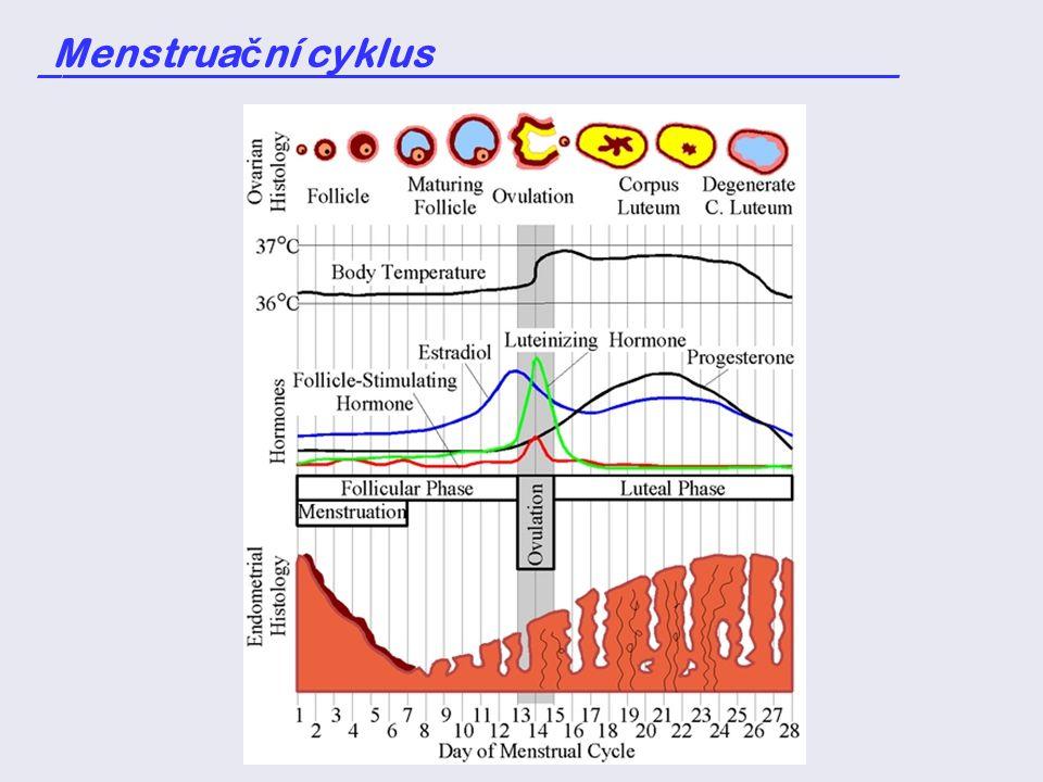 Menstrua č ní cyklus _____________________________________