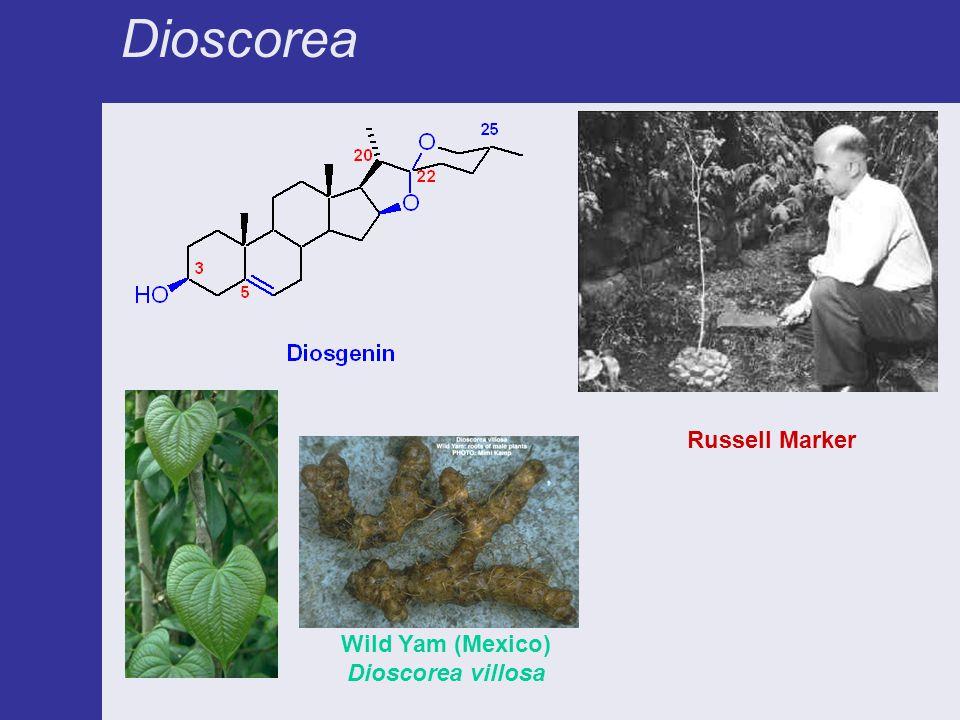 Dioscorea Wild Yam (Mexico) Dioscorea villosa Russell Marker