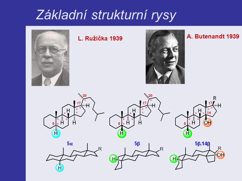 Základní strukturní rysy L. Ružička 1939 A. Butenandt 1939
