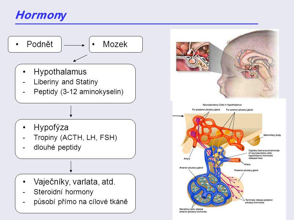 Podnět Hormon y _____________________________________ Mozek Hypothalamus -Liberiny and Statiny -Peptidy (3-12 aminokyselin) Hypofýza -Tropiny (ACTH, L