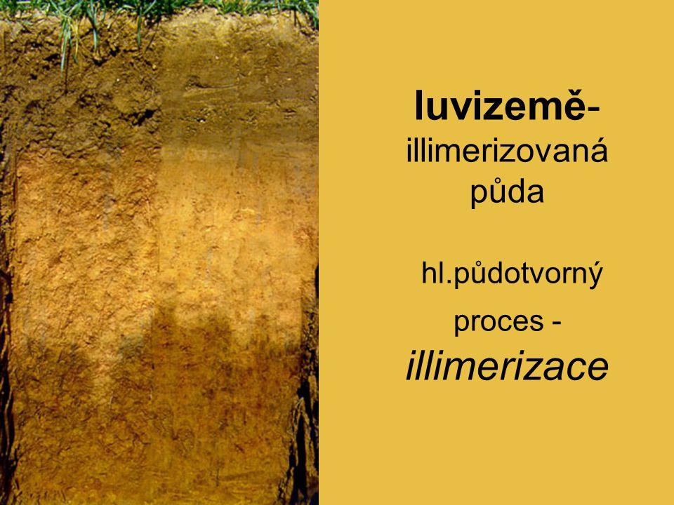 luvizemě- illimerizovaná půda hl.půdotvorný proces - illimerizace