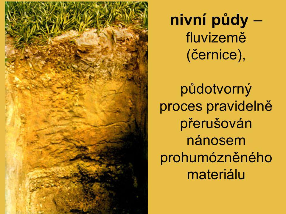nivní půdy – fluvizemě (černice), půdotvorný proces pravidelně přerušován nánosem prohumózněného materiálu