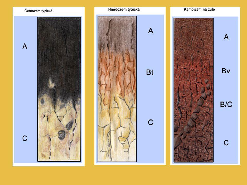 Půdotvorné procesy: Vnitropůdní zvětrávání – poloha, kde dochází k intenzivnímu zvětrávání prvotních minerálů a k tvorbě druhotných minerálů a tvorbě jílu.