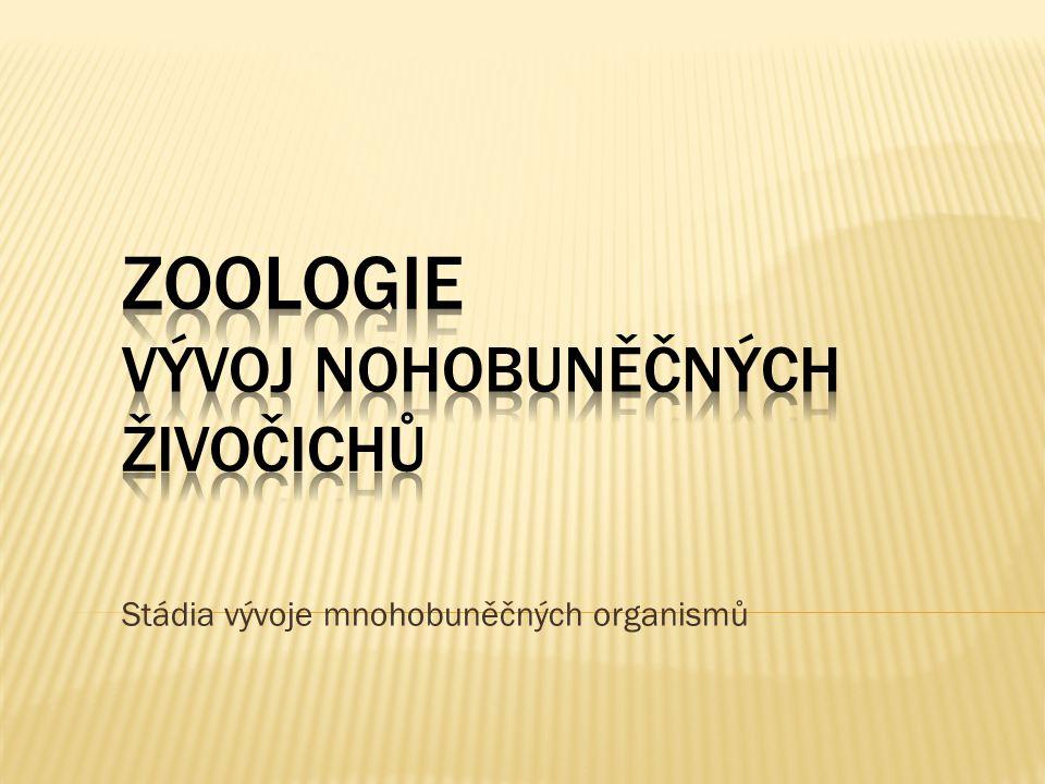 Stádia vývoje mnohobuněčných organismů