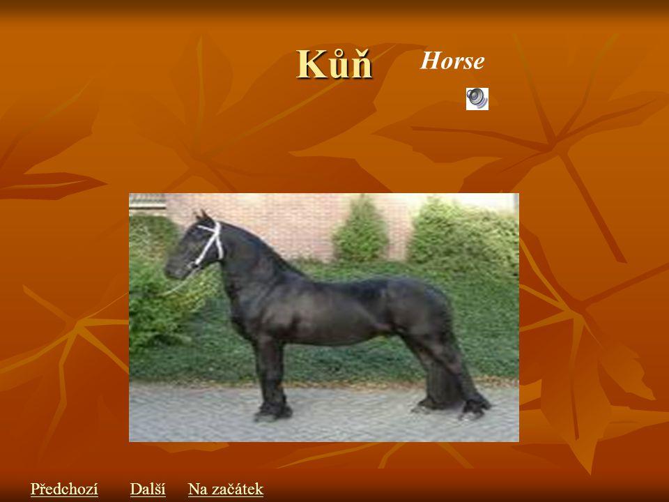 Kůň Horse PředchozíDalšíNa začátek