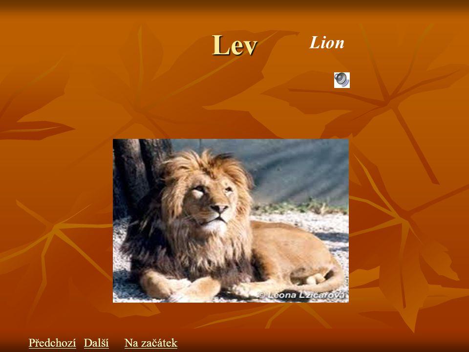 Lev Lion PředchozíDalšíNa začátek