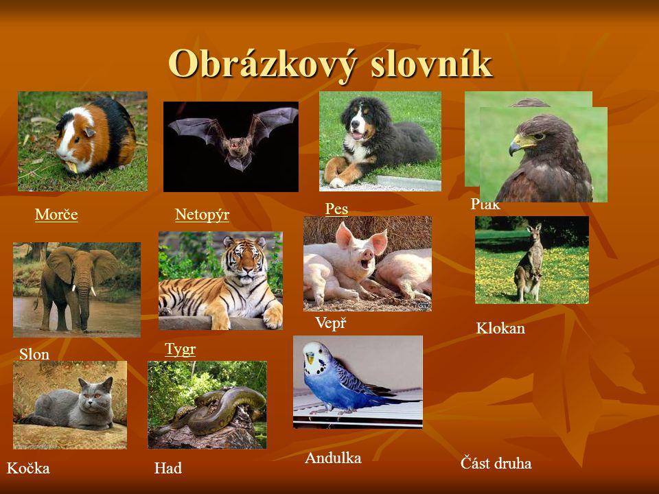 Obrázkový slovník Část druha MorčeNetopýr Pes Pták Slon Tygr Vepř KočkaHad Andulka Klokan