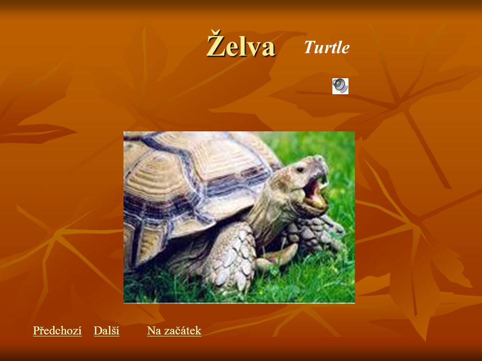 Želva Turtle PředchozíDalšíNa začátek