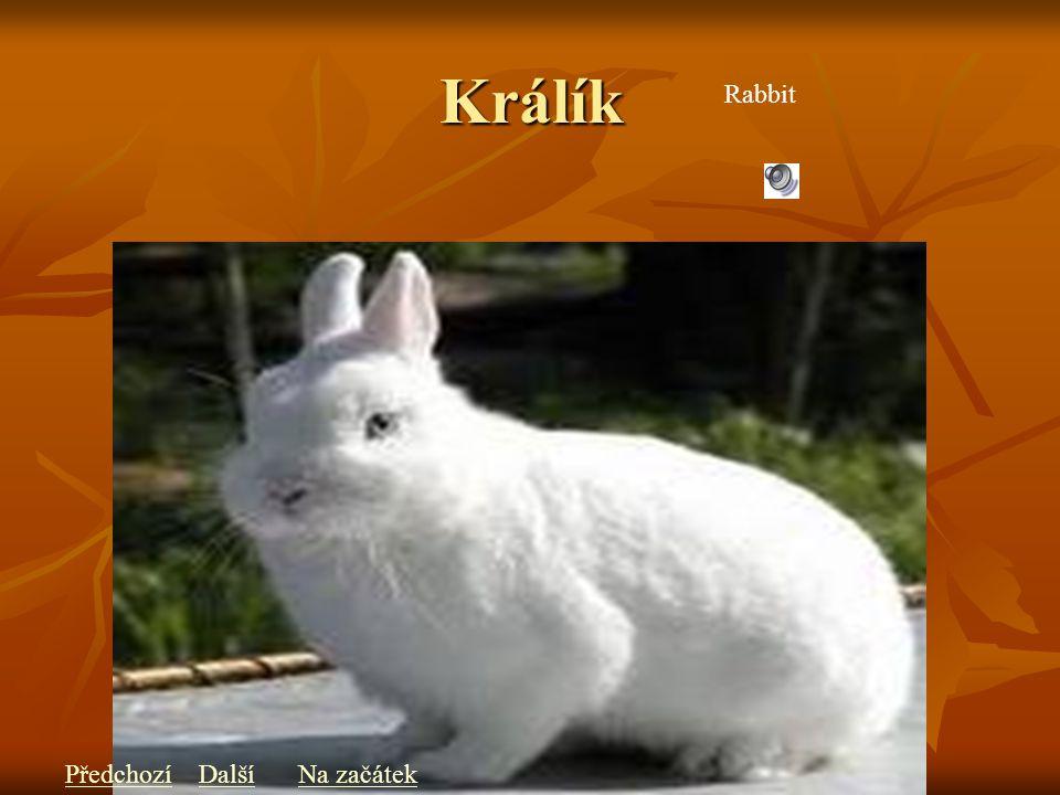 Králík Rabbit PředchozíDalšíNa začátek